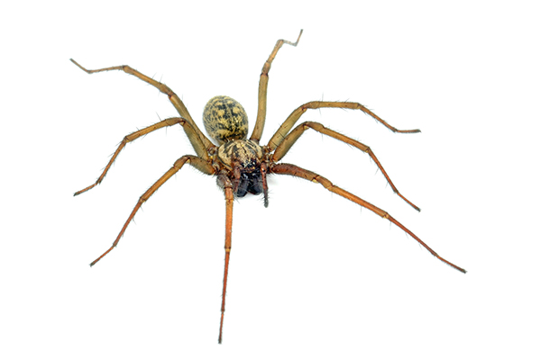 Ridleys Pest Control a-large-spider